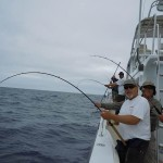 Hot tuna action going on aboard private boater Captain Ron Bower's boat Salt Fever.