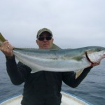 Nice La Jolla Yellowtail caught aboard the beach launch skiff of Captain Kelvin Nettleton of La Jolla Fishing on May 31, 2015